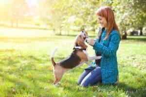 19 процентов опрошенных находят утешение вобщении сживотными. Фото: Фото: Depositphotos.com