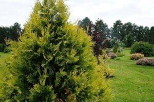 Елена Платонова: «Ботанический сад — идеальное место для погружения в тишину»