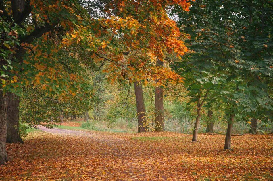 Петергофский парк осенью прекрасен. Фото Анны Кондюковой