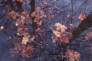 Марк Полыковский: «Осень, мы же с тобой заодно…»