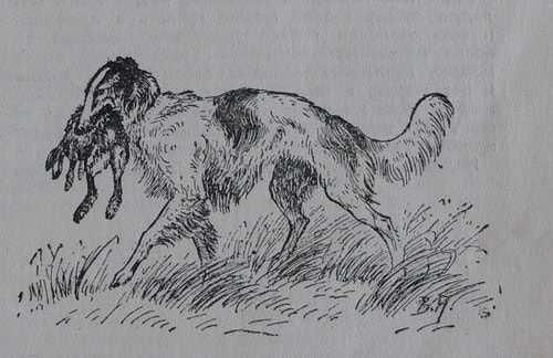 Подача зайца. Рисунок Веры Амелунг