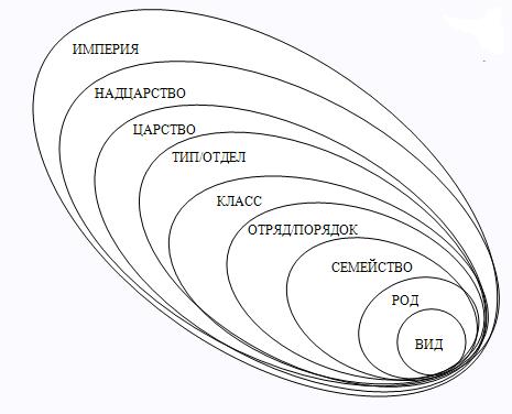 Рис. 1. Таксономия организмов