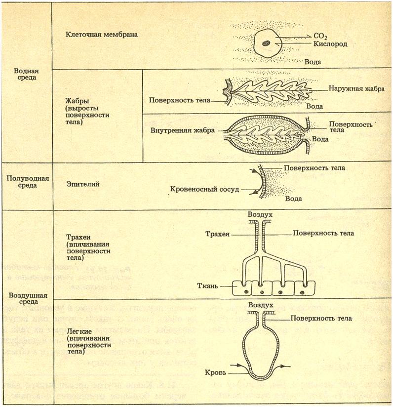 Рис. 7. Эволюция приспособлений (иллюстрация из книги)