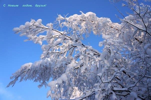 Зима. Фото Ирины Ларионовой