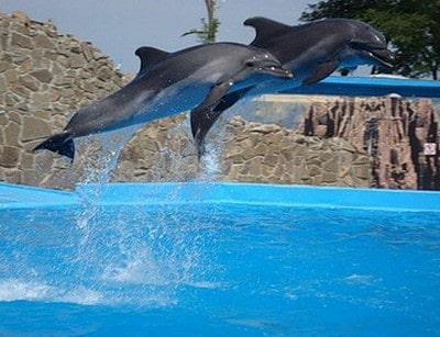 Дельфинарий в Ейске. Фото vyeiske.ru