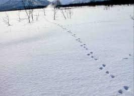 В какую сторону скакал заяц?