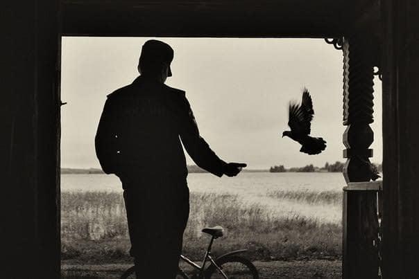 Анна Резников. Мужчина и голубь